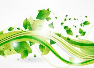vector-eco-bladeren-en-groene-golf_53-10353 kopie